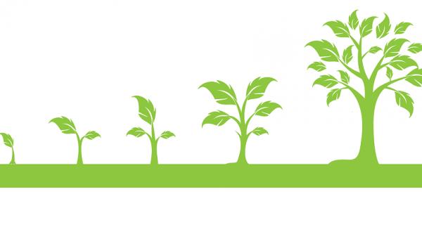 arbre-croissance1